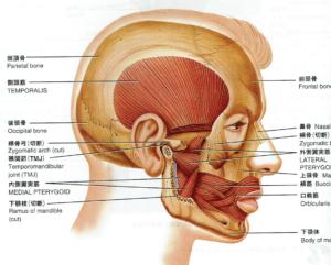 あくび,顎が痛い,顎関節症,原因,頭痛